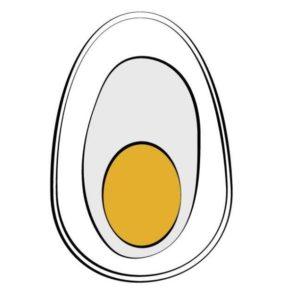 3 parts of egg illustration